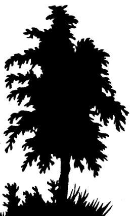 arbre en silhouette décor accessoire theatre d`ombres ombres chinoises silhouettes marionnettes
