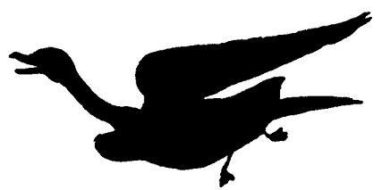 oie, oiseau, volaille, basse-cour, ombre chinoise, silhouette