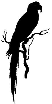 perroquet anipmal oiseau en théâtre d`ombres silhouettes ombres chinoises marionnettes