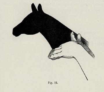 cheval de monture, victor effendi bertrand, ombromanie, en ombres chinoises, theatre d`ombres, silhouettes, marionnettes